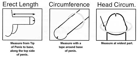 penis measuring pictures